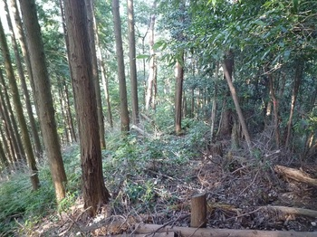 P1120455植林境尾根.JPG