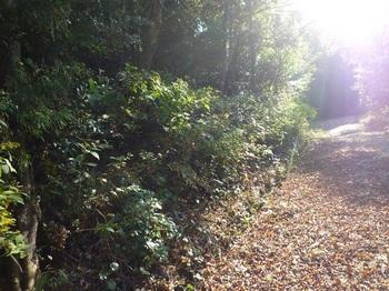 P1120458林道への下降地点.JPG
