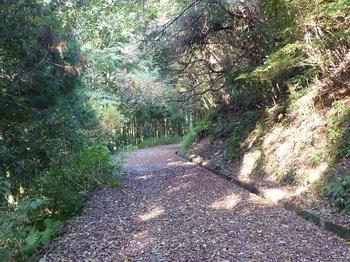 P1120462舗装林道.JPG