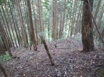 P1120477尾根に上がる・ヒノキ植林最上部(逆方向).JPG