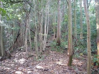 P1120517右ヒノキ植林.JPG