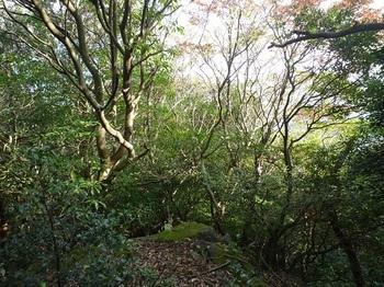 P1120524岩上から樹間僅かな展望(逆方向).JPG