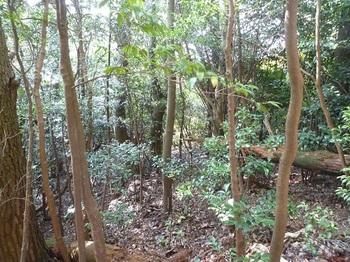 P1120535左の雑木林へ逃げ込む.JPG
