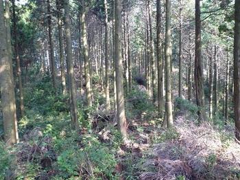 P1120548植林境.JPG