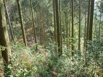 P1120551右下に新設作業道・さらに下方に林道.JPG