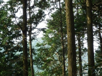 P1120558樹間に径塚山.JPG