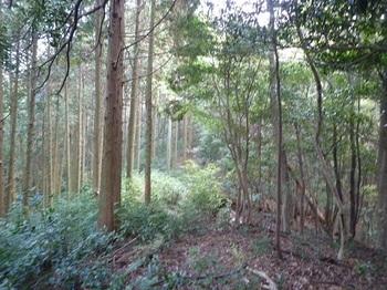 P1120562 左ヒノキ林境.JPG