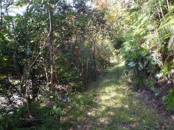 P1120612やや草が被る林道.JPG