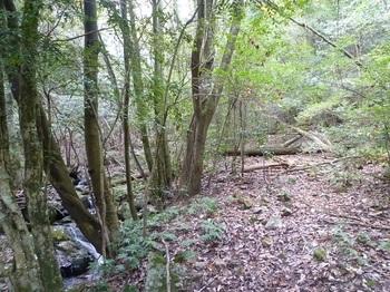 P1120623幅広の林道.JPG