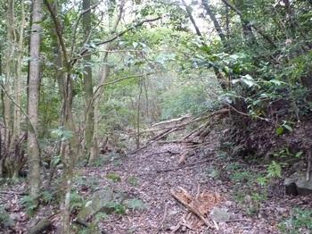 P1120631やや荒れた林道.JPG