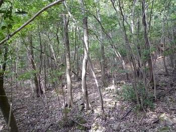 P1120649雑木疎林の谷分岐.JPG