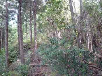 P1120668植林境.JPG