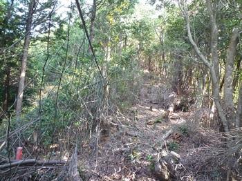 P1120670植林境・ネット.JPG