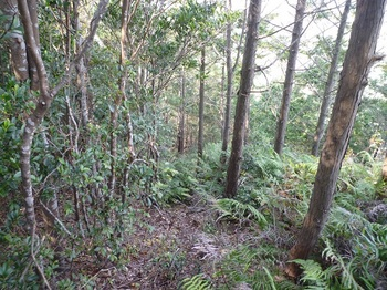 P1120688植林境.JPG