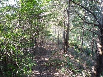 P1120689植林境.JPG