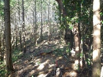 P1120744ヒノキ林境の主尾根.JPG