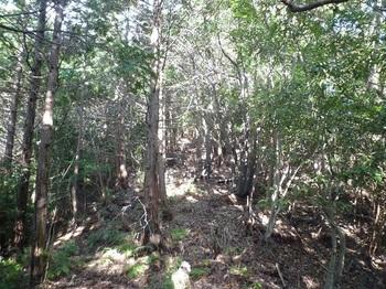P1120747植林境尾根.JPG