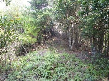 P1120762山頂北西部の平坦シダ尾根.JPG