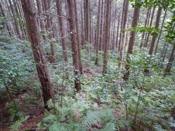 P1120811植林斜面.JPG