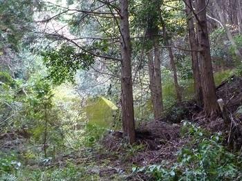 P1120821 左谷の堰堤.JPG