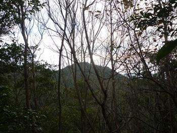 P1120868 ピークから樹間に熊野岳.JPG