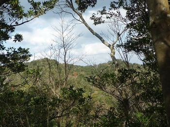 P1120886 樹間に346m峰(左).JPG