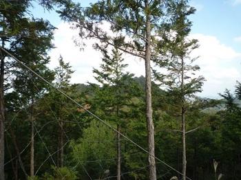 P1120914ヒノキ植林境尾根最上部から熊野岳.JPG
