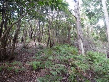 P1120938植林が終わり雑木シダヤブに入る.JPG