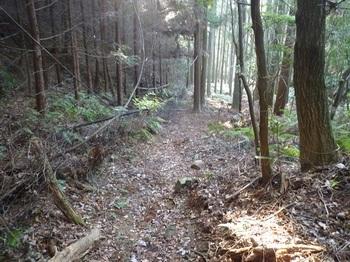 P1120969植林谷の山道(参道).JPG