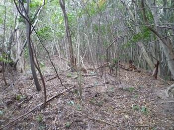 P1120981雑木疎林尾根の山道.JPG