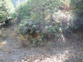 P1130161登山口.JPG