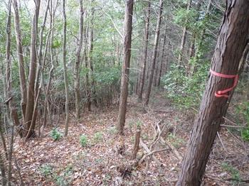 P1130215植林境尾根道.JPG
