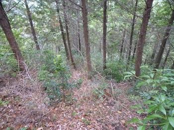 P1130220 470mピークから植林境北尾根方向.JPG