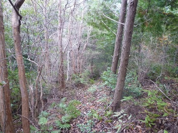 P1130231植林境.JPG