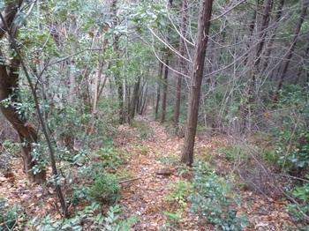 P1130233植林境を急降下.JPG