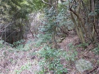 P1130256谷沿いの山道.JPG