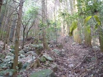 P1130258スギ植林帯.JPG