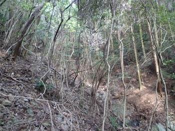 P1130274右斜面の植林帯.JPG