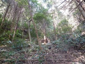 P1130282植林谷となり勾配がやや緩む.JPG