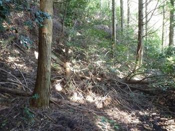 P1130289植林斜面の平坦地.JPG