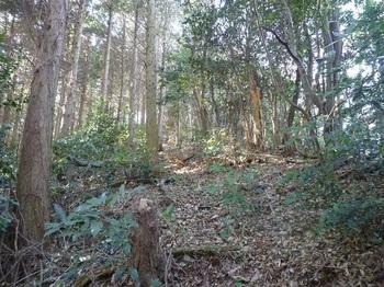 P1130293植林境尾根.JPG