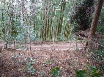 P1130332右下に林道.JPG