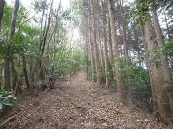 P1130336ヒノキ植林境を登り返す.JPG