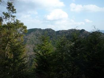 P1130346少し下ったヒノキ植林境から500m峰を望む.JPG