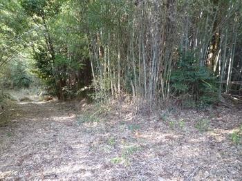 P1130353鞍部で林道と出会う.JPG