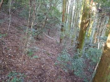 P1130356スギ植林沿いの山道.JPG