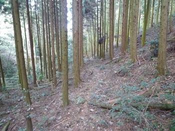P1130364植林帯の山道.JPG