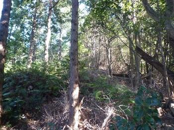 P1130429 300mヒノキ植林境鞍部.JPG