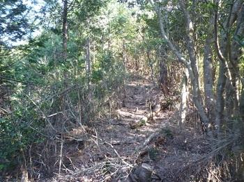 P1130430ヒノキ植林境.JPG