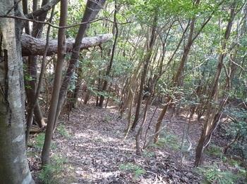 P1130467雑木疎林谷の斜面.JPG